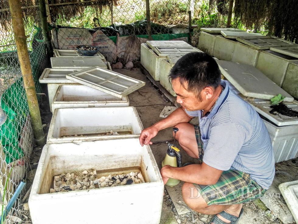 Vua ốc bươu đen xứ Nghệ, mỗi năm thu 500 triệu đồng - Ảnh 4.