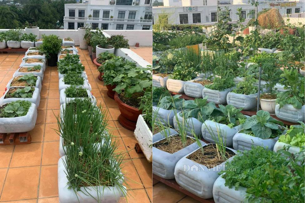 Tận dụng can nhựa mẹ đảm Cần Thơ biến sân thượng thành khu vườn xanh mát - Ảnh 5.