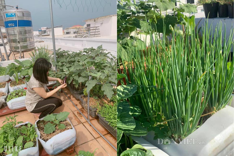 Tận dụng can nhựa mẹ đảm Cần Thơ biến sân thượng thành khu vườn xanh mát - Ảnh 12.