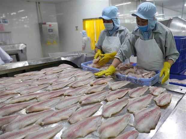 Ngành cá tra có khả năng phục hồi hoàn toàn từ quý 3 - Ảnh 2.