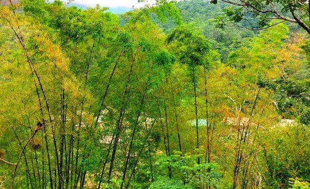 Hàng triệu con châu chấu lưng vàng đang tàn phá hoa màu ở Mường Lát, Thanh Hoá - Ảnh 3.
