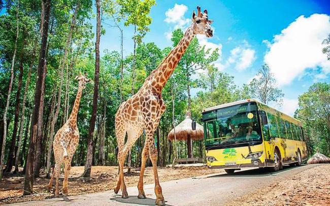 Vingroup đầu tư gần 2.000 tỷ đồng làm khu sinh thái Vinpearl Safari ở Quảng Ninh - Ảnh 3.