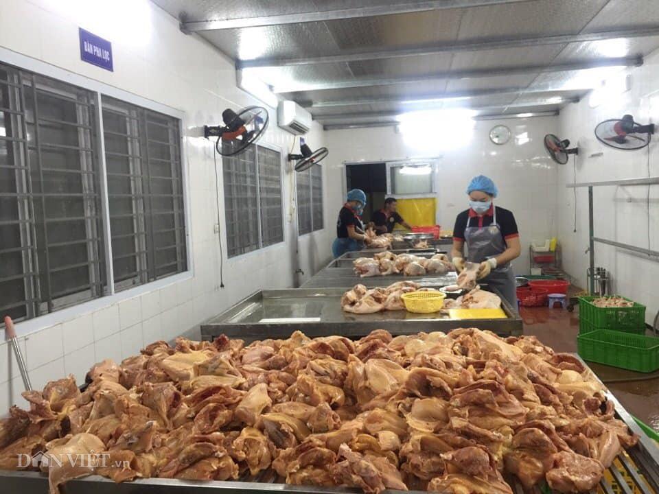 Giá gia cầm hôm nay 1/6: Gà vẫn chững giá, vịt thịt tiêu thụ thuận lợi - Ảnh 2.