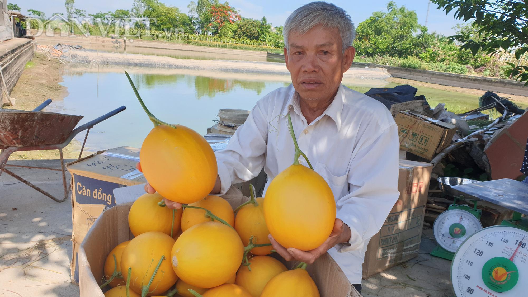 Thanh Hóa: U70 trồng dưa vàng công nghệ cao, ngay vụ đầu đã có gần 50 triệu - Ảnh 5.