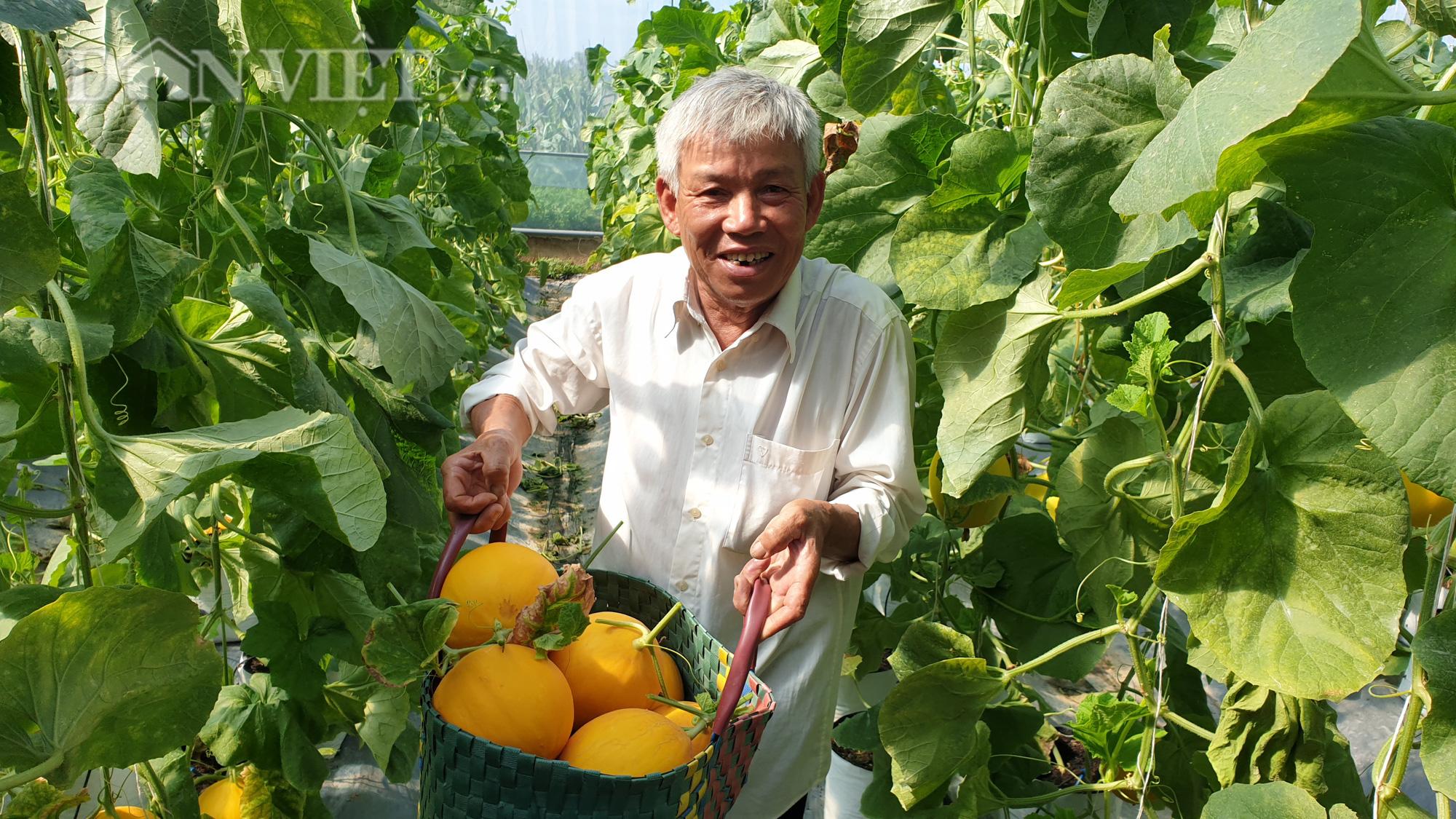 Thanh Hóa: U70 trồng dưa vàng công nghệ cao, ngay vụ đầu đã có gần 50 triệu - Ảnh 1.