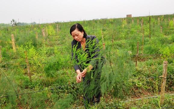 """Trồng cây """"rau vua"""", nuôi con đặc sản, nông dân nhanh giàu - Ảnh 2."""