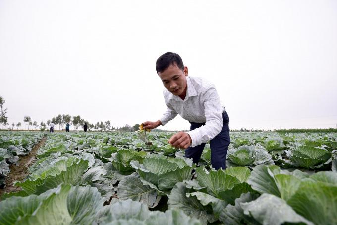 Không được hưởng thuế suất ưu đãi, doanh nghiệp nhập khẩu hạt giống kêu trời - Ảnh 4.