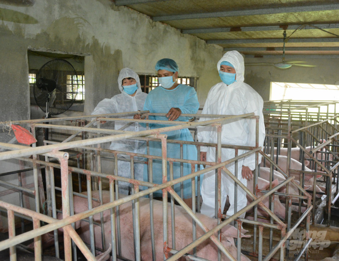 Nam Định: Nhập lợn ông bà, phục vụ tái đàn - Ảnh 1.