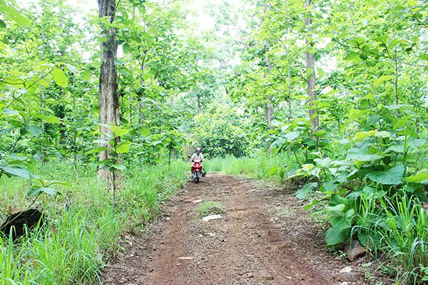 Bất ngờ ở Đồng Nai lại có rừng gỗ tếch cổ thụ lớn nhất cả nước liên quan đến bà Trần Lệ Xuân  - Ảnh 1.