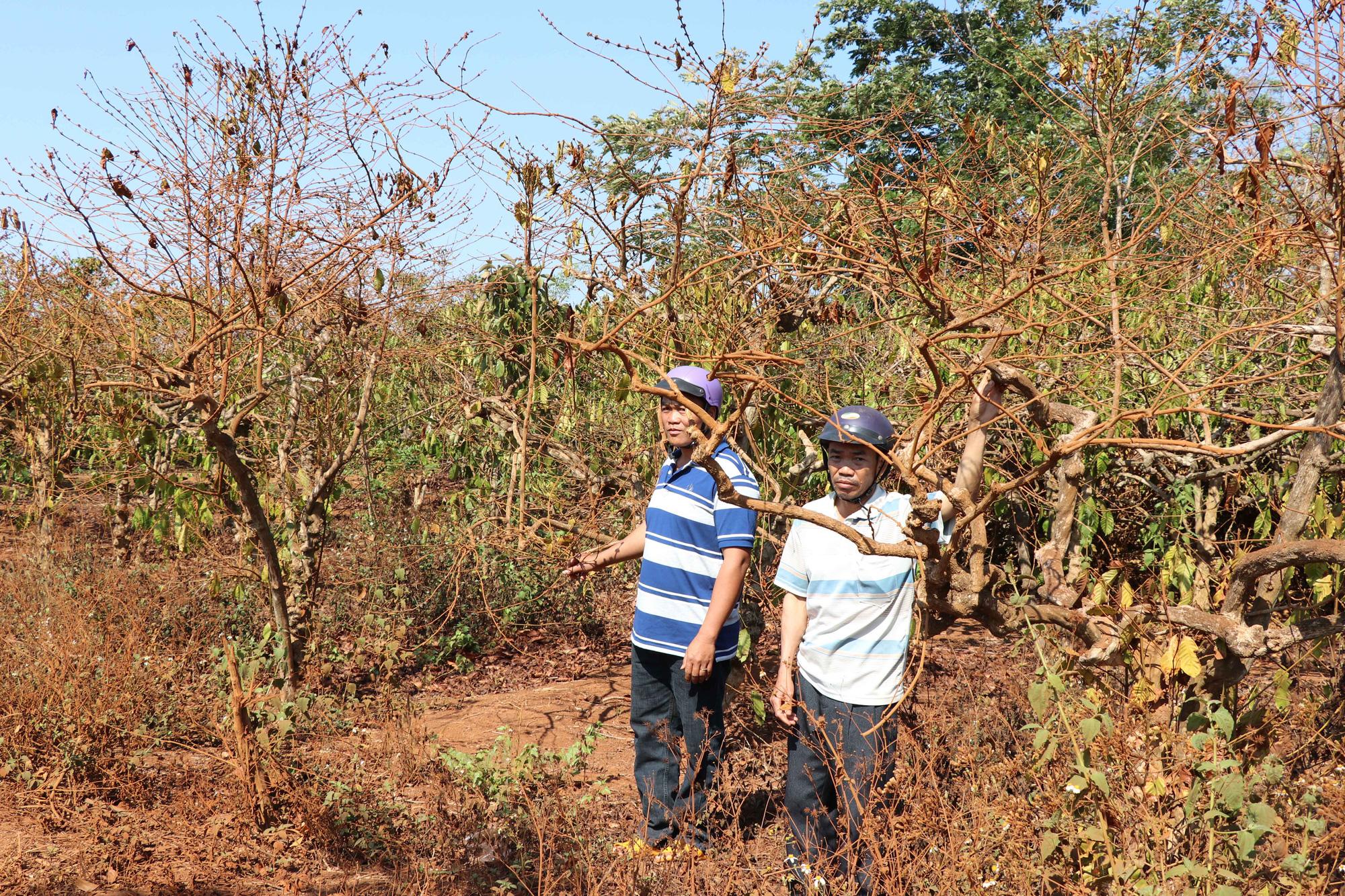 Bàn giao đất, vướng đền bù cây trồng trên 23,4 ha đất - Ảnh 1.