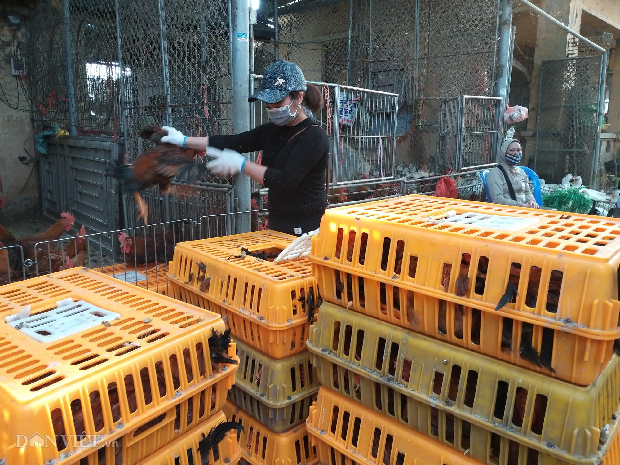 Giá gia cầm hôm nay 11/6: Giá gà, vịt thịt có dấu hiệu chững lại, gà trắng dễ bán - Ảnh 1.