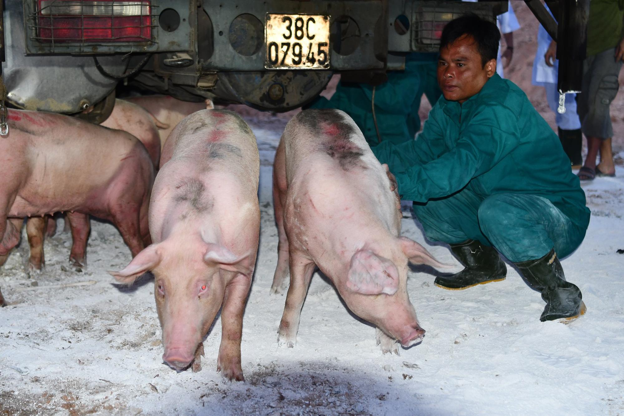 Giá heo hơi hôm nay 27/6: Giá heo tăng, lo ngại dịch tả lợn châu Phi tái phát - Ảnh 1.
