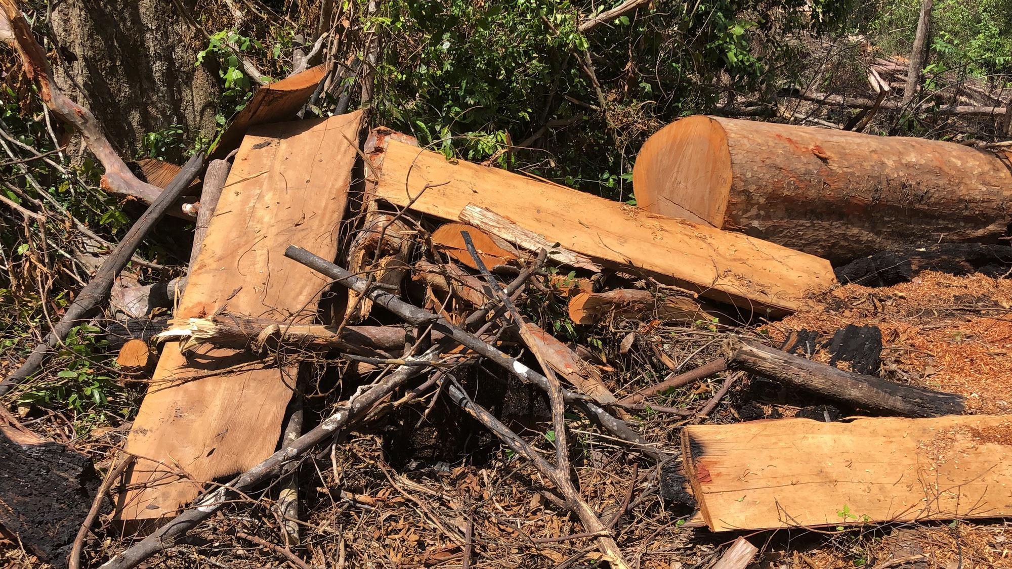 Gia Lai: Phá rừng quy mô lớn, lâm tặc ngang nhiên đốt gốc phi tang - Ảnh 8.