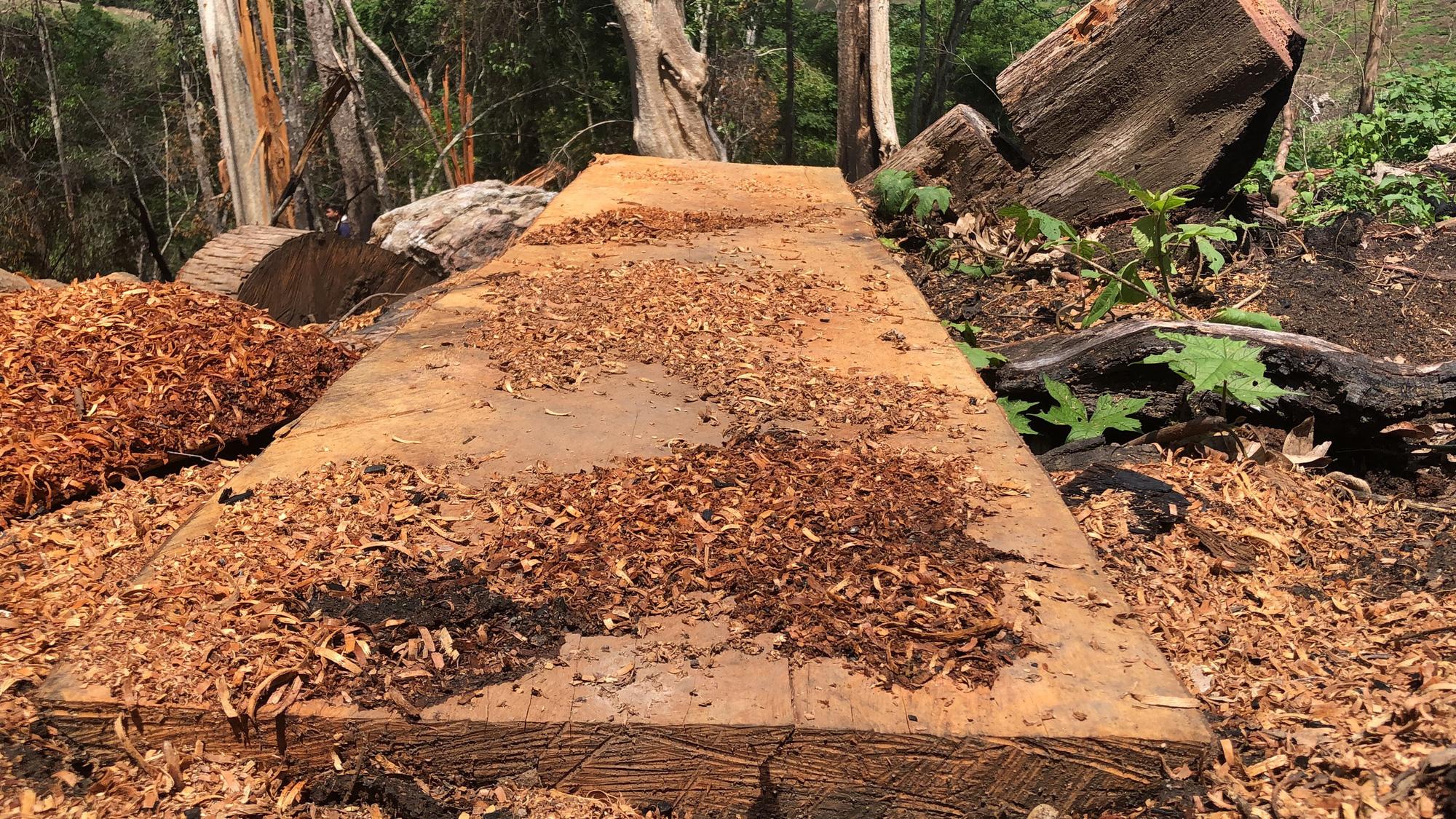 Gia Lai: Phá rừng quy mô lớn, lâm tặc ngang nhiên đốt gốc phi tang - Ảnh 7.
