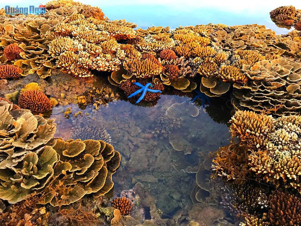 Quảng Ngãi: Rạn san hô khổng lồ bất ngờ hiện ra, đẹp lung linh, cứ ngỡ trong mơ chứ không phải thực - Ảnh 4.
