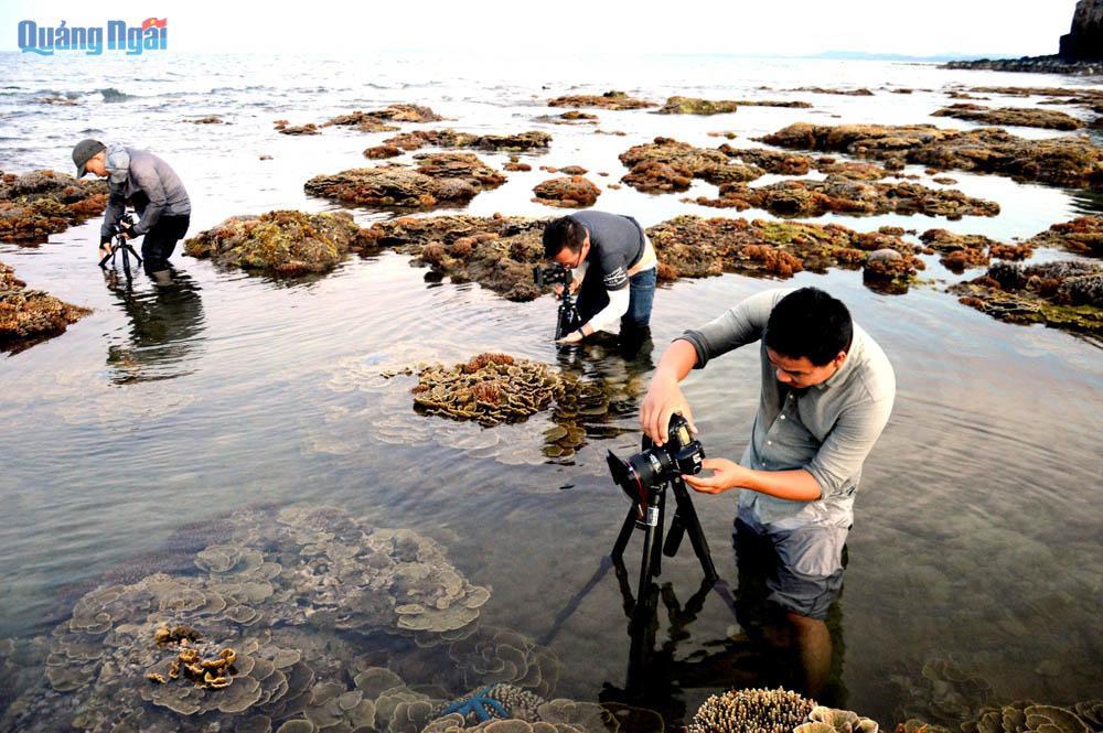 Quảng Ngãi: Rạn san hô khổng lồ bất ngờ hiện ra, đẹp lung linh, cứ ngỡ trong mơ chứ không phải thực - Ảnh 9.