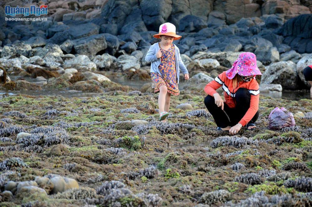 Quảng Ngãi: Rạn san hô khổng lồ bất ngờ hiện ra, đẹp lung linh, cứ ngỡ trong mơ chứ không phải thực - Ảnh 10.