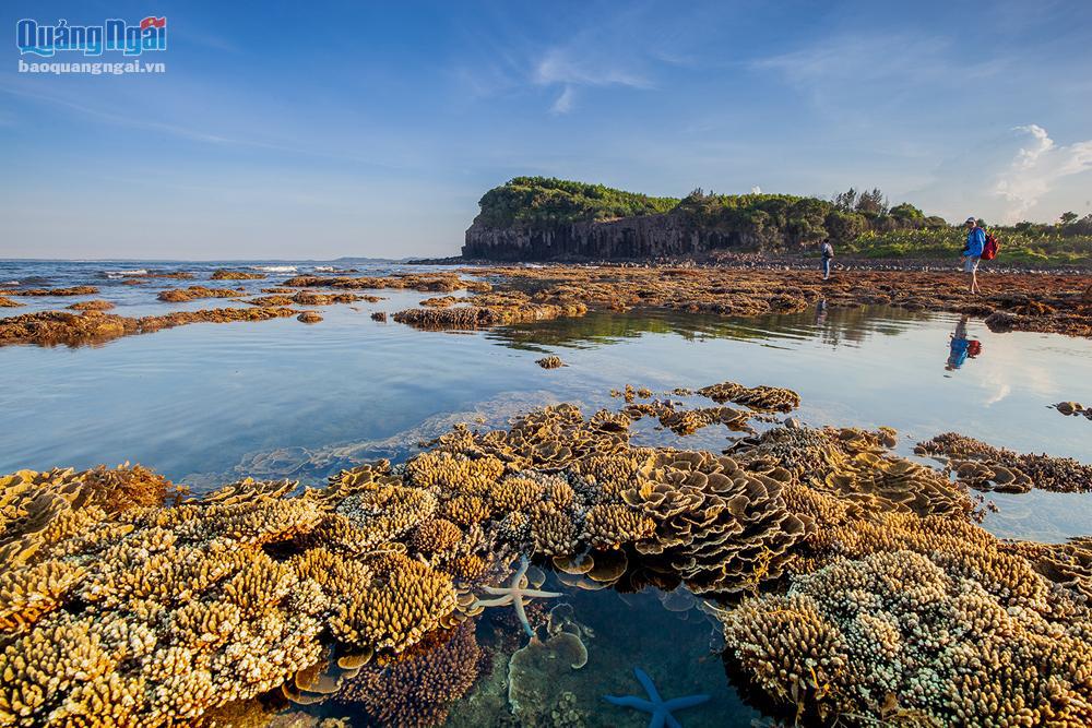 Quảng Ngãi: Rạn san hô khổng lồ bất ngờ hiện ra, đẹp lung linh, cứ ngỡ trong mơ chứ không phải thực - Ảnh 1.