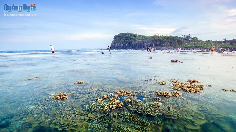 Quảng Ngãi: Rạn san hô khổng lồ bất ngờ hiện ra, đẹp lung linh, cứ ngỡ trong mơ chứ không phải thực - Ảnh 2.