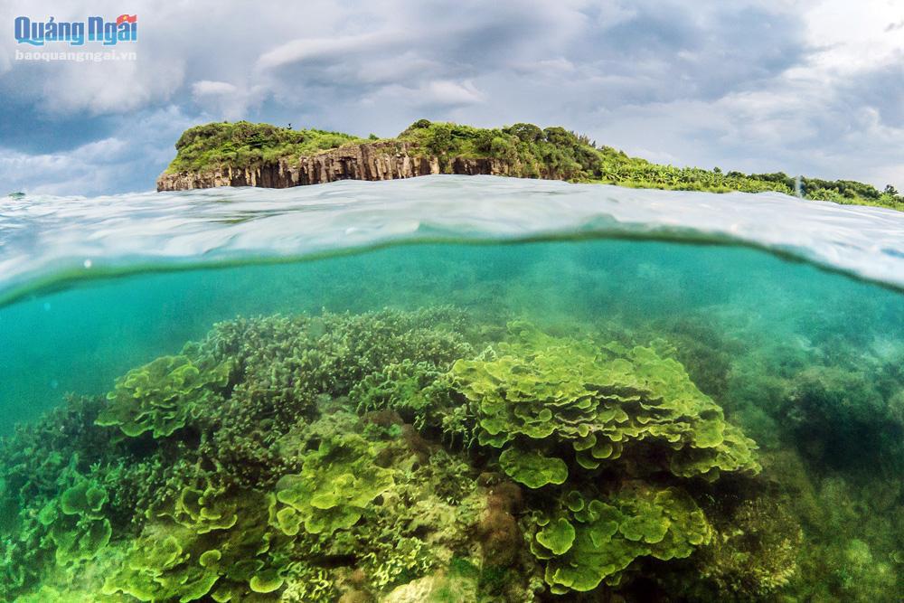 Quảng Ngãi: Rạn san hô khổng lồ bất ngờ hiện ra, đẹp lung linh, cứ ngỡ trong mơ chứ không phải thực - Ảnh 6.