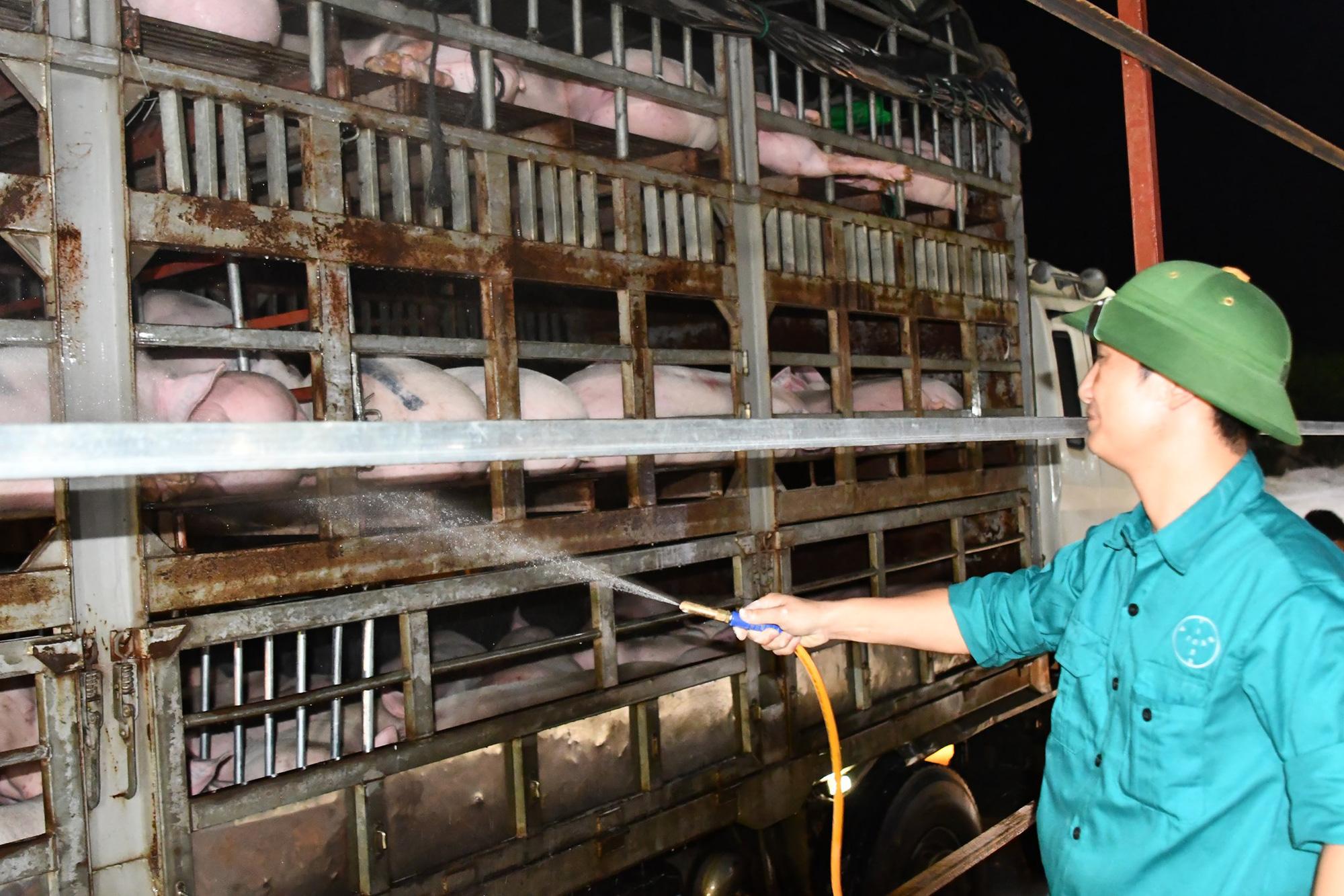 Bộ trưởng Bộ Nông nghiệp: Giá lợn hơi sẽ giảm khi nhập khẩu lợn sống từ Thái Lan - Ảnh 2.