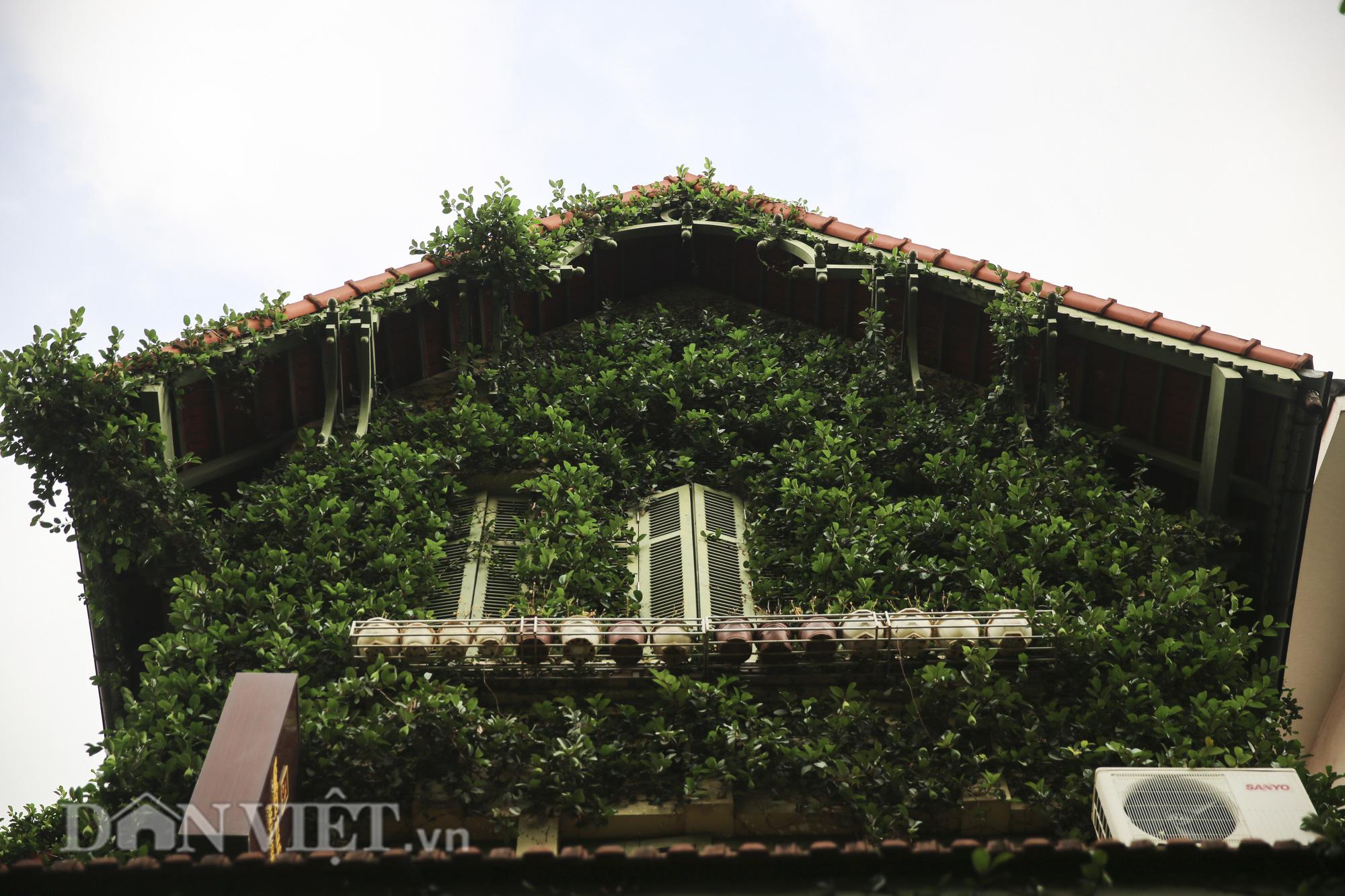 """Chiêm ngưỡng căn biệt thự được """"ngụy trang"""" bởi cây xanh giữa lòng Hà Nội - Ảnh 10."""