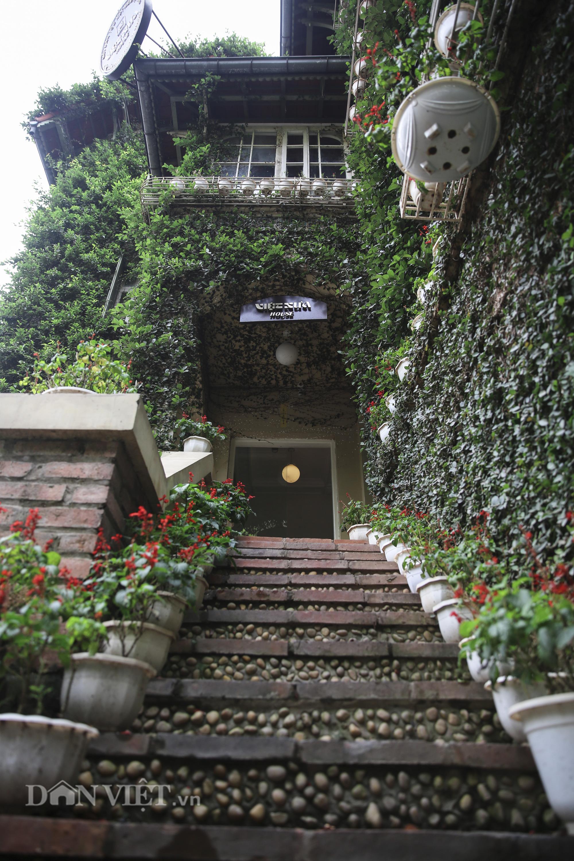 """Chiêm ngưỡng căn biệt thự được """"ngụy trang"""" bởi cây xanh giữa lòng Hà Nội - Ảnh 3."""
