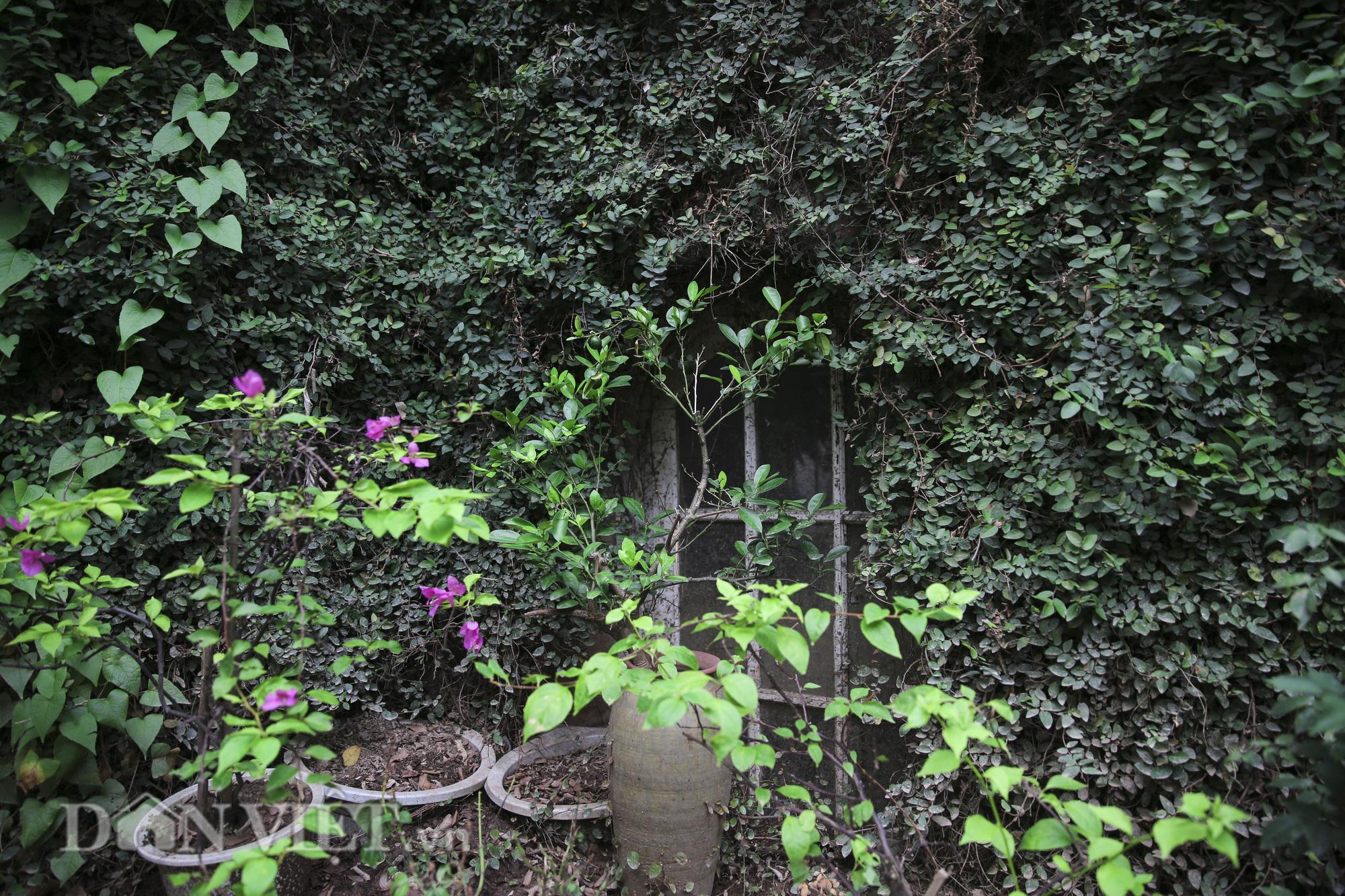 """Chiêm ngưỡng căn biệt thự được """"ngụy trang"""" bởi cây xanh giữa lòng Hà Nội - Ảnh 4."""