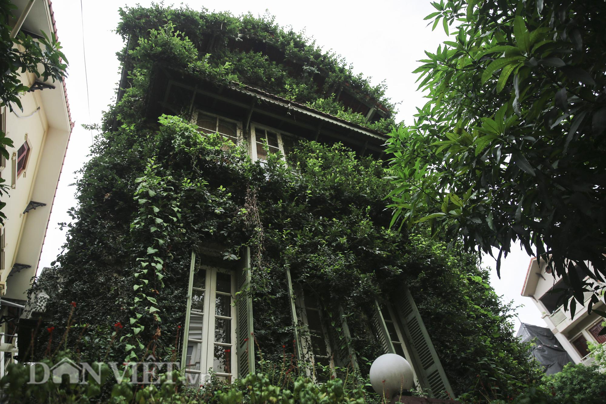 """Chiêm ngưỡng căn biệt thự được """"ngụy trang"""" bởi cây xanh giữa lòng Hà Nội - Ảnh 5."""