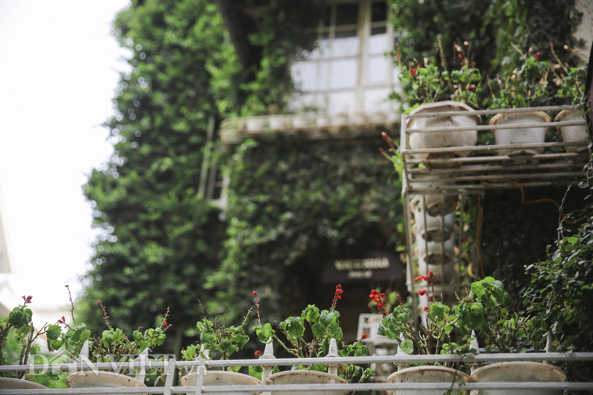 """Chiêm ngưỡng căn biệt thự được """"ngụy trang"""" bởi cây xanh giữa lòng Hà Nội - Ảnh 6."""