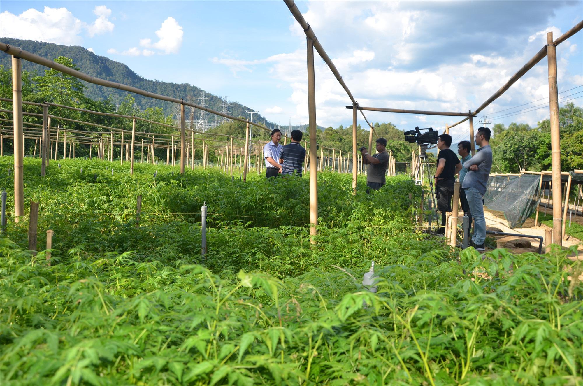 Quảng Nam: Đề xuất cơ chế hỗ trợ trồng cây lấy gỗ làm nhà - Ảnh 1.