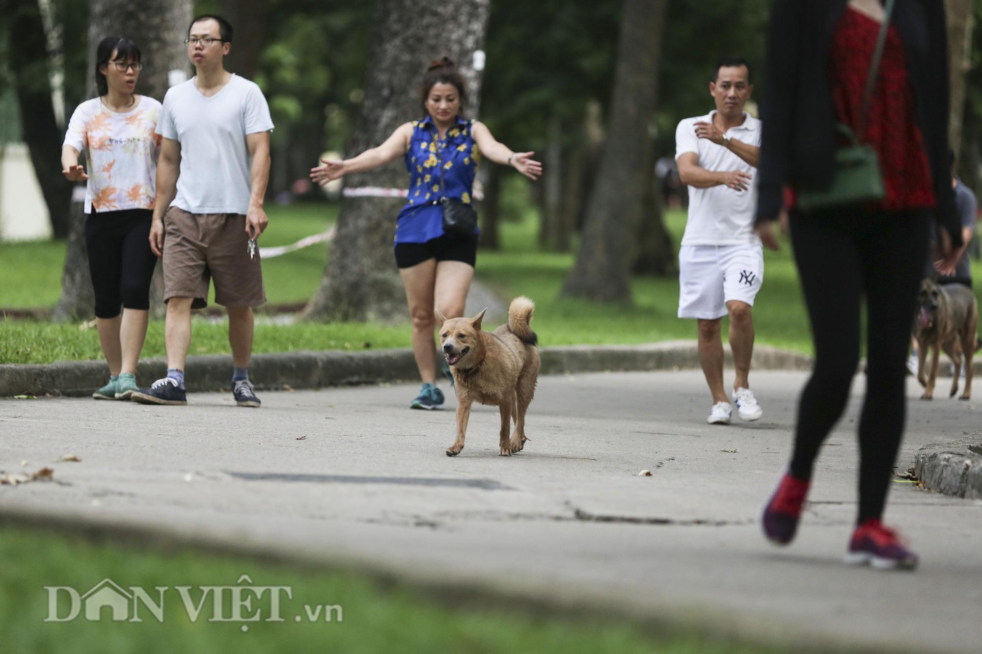 """Chó thả rông, không rọ mõm """"đại náo"""" công viên trong mùa bệnh dại - Ảnh 12."""