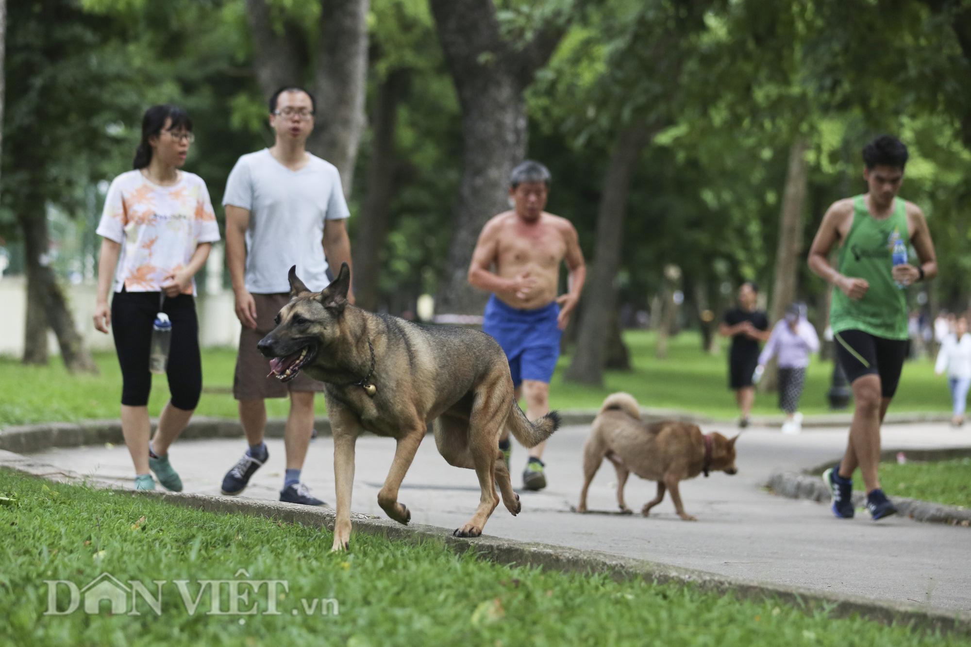 """Chó thả rông, không rọ mõm """"đại náo"""" công viên trong mùa bệnh dại - Ảnh 3."""