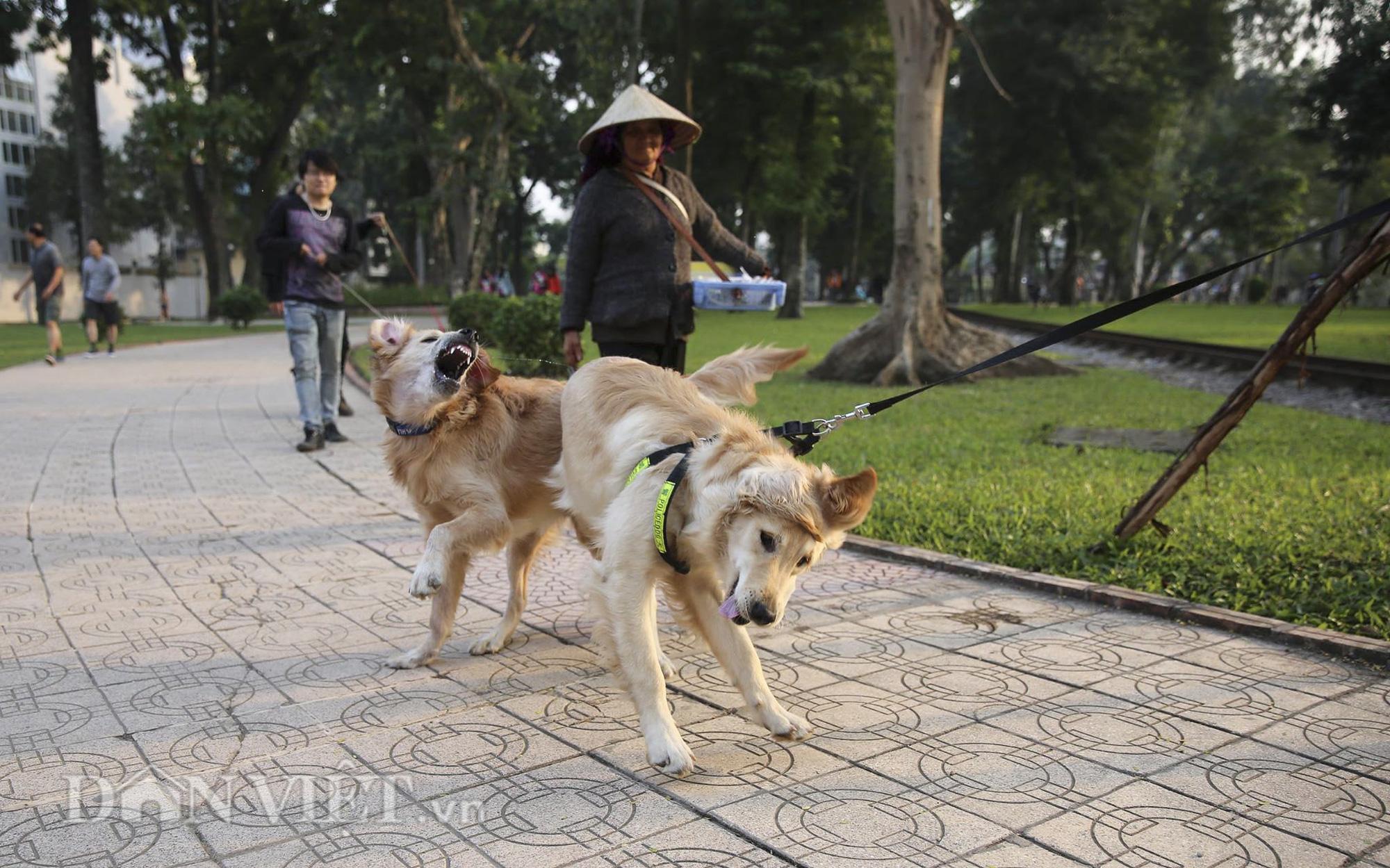 """Chó thả rông, không rọ mõm """"đại náo"""" công viên trong mùa bệnh dại - Ảnh 5."""