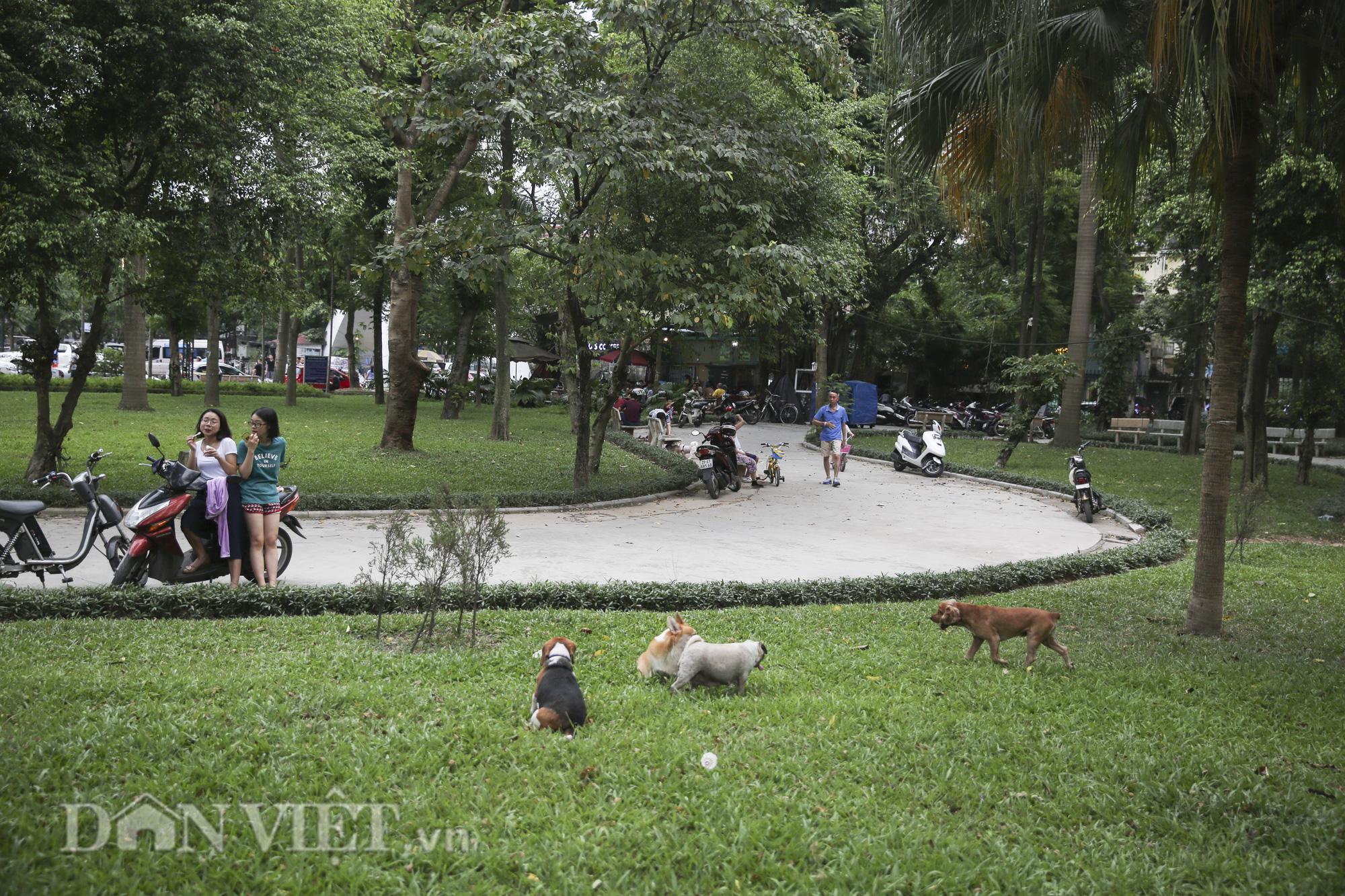 """Chó thả rông, không rọ mõm """"đại náo"""" công viên trong mùa bệnh dại - Ảnh 9."""