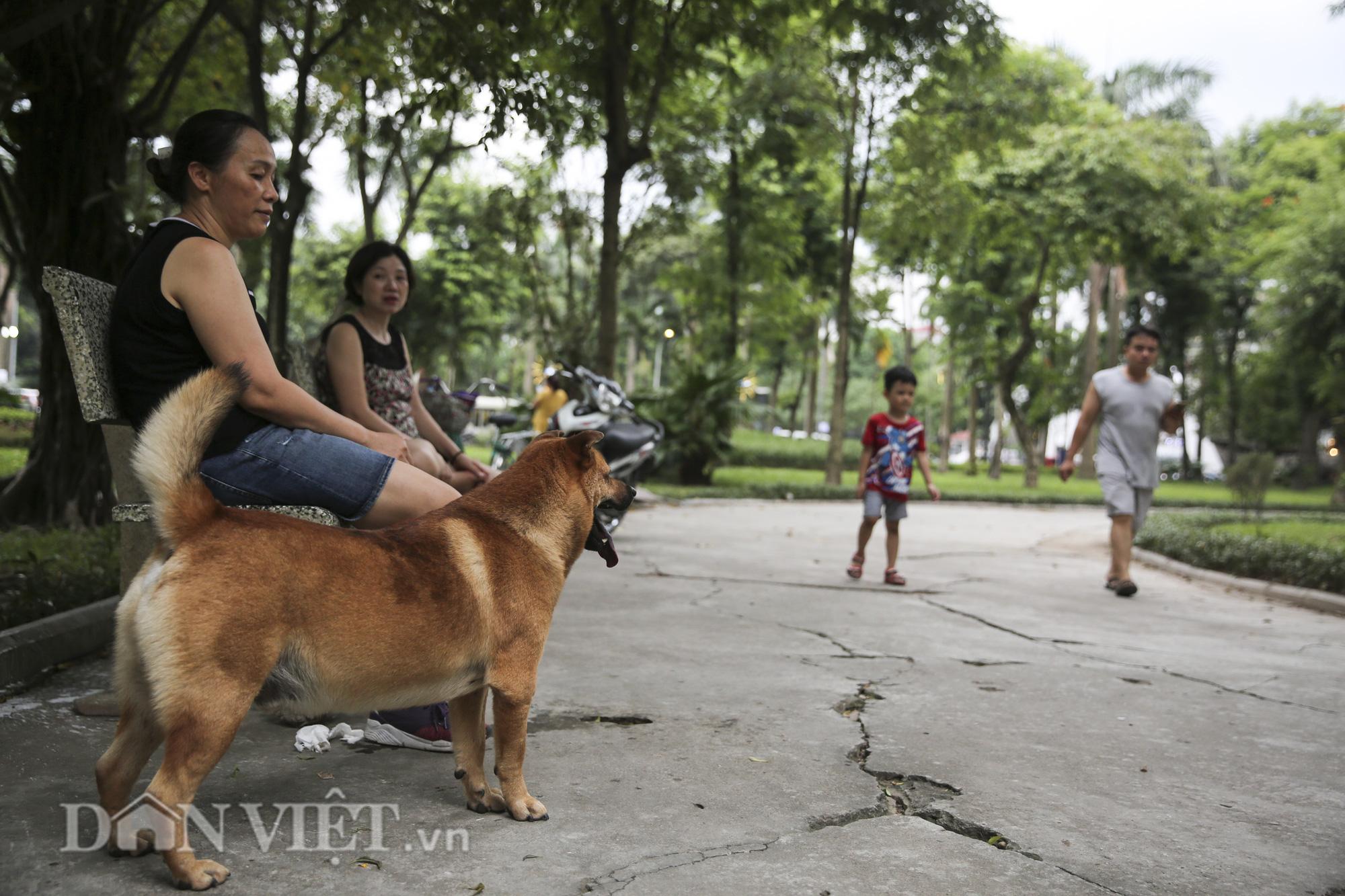 """Chó thả rông, không rọ mõm """"đại náo"""" công viên trong mùa bệnh dại - Ảnh 10."""