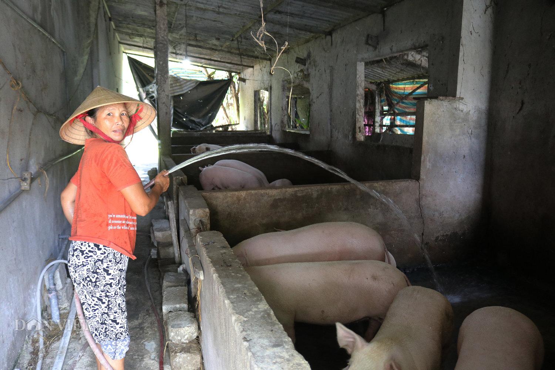 Dịch tả lợn châu Phi tái phát nhiều nơi, nông dân Hà Tĩnh vừa nuôi lợn vừa run - Ảnh 3.