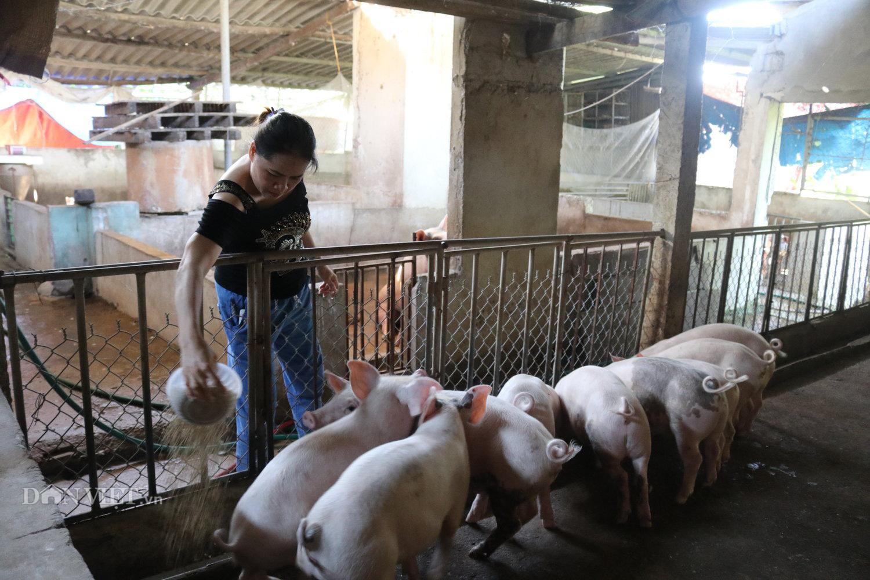Dịch tả lợn châu Phi tái phát nhiều nơi, nông dân Hà Tĩnh vừa nuôi lợn vừa run - Ảnh 1.