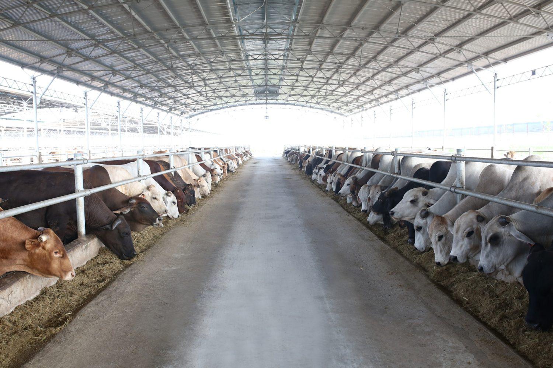 Đua cùng tỷ phú, bầu Đức lên kế hoạch kiếm tiền từ chăn nuôi? - Ảnh 2.