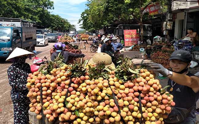 Khoảng 100 tấn vải thiều Việt Nam sẽ lên kệ siêu thị Úc - Ảnh 1.