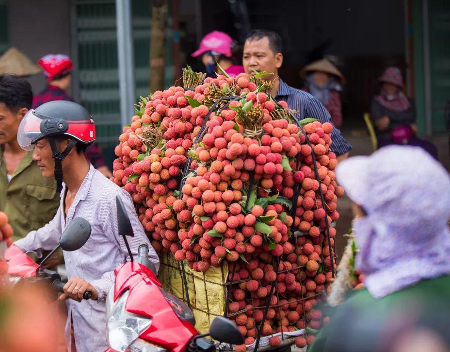 Xuất khẩu 13.500 tấn vải thiều tươi qua cửa khẩu Tân Thanh, Lạng Sơn - Ảnh 1.