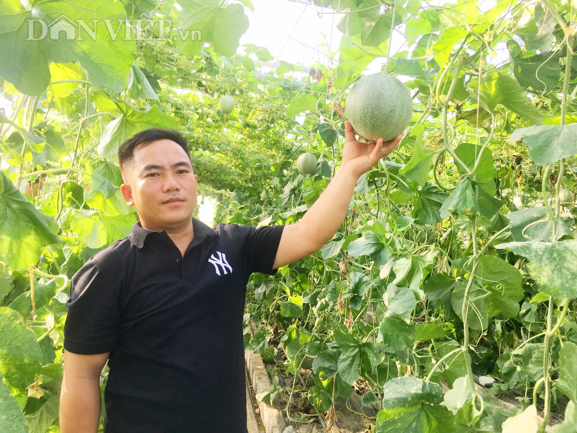 Anh Nguyễn Văn Tấn, xã Hóa Thanh, huyện Minh Hóa (tỉnh Quảng Bình) thành công với mô hình trồng dưa lưới. Ảnh: PV