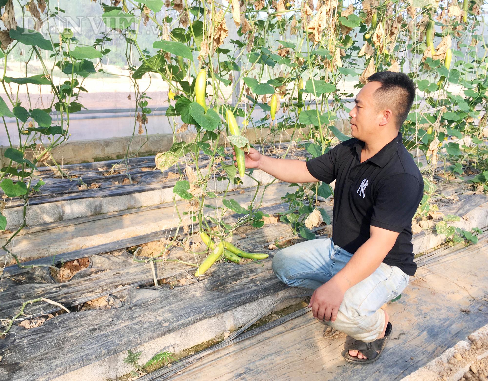 Anh Nguyễn Văn Tấn luôn chú trọng áp dụng tiến bộ khoa học kỹ thuật vào mô hình trồng dưa lưới và một số loại rau, củ, quả khác Ảnh: PV
