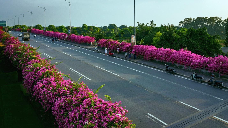 Vệt hoa giấy nhuộm tím một góc khu đô thị Ecopark - Ảnh 2.