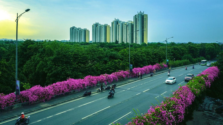 Vệt hoa giấy nhuộm tím một góc khu đô thị Ecopark - Ảnh 6.