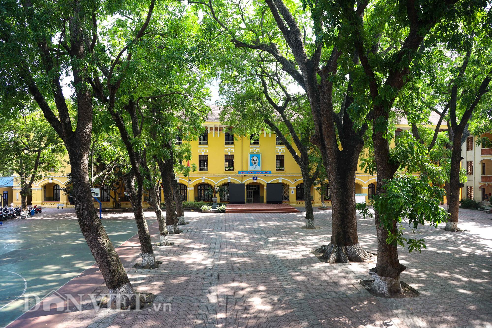 Học sinh Hà Nội không hề lo sợ dù ngồi giữa sân trường đầy cây cổ thụ - Ảnh 1.