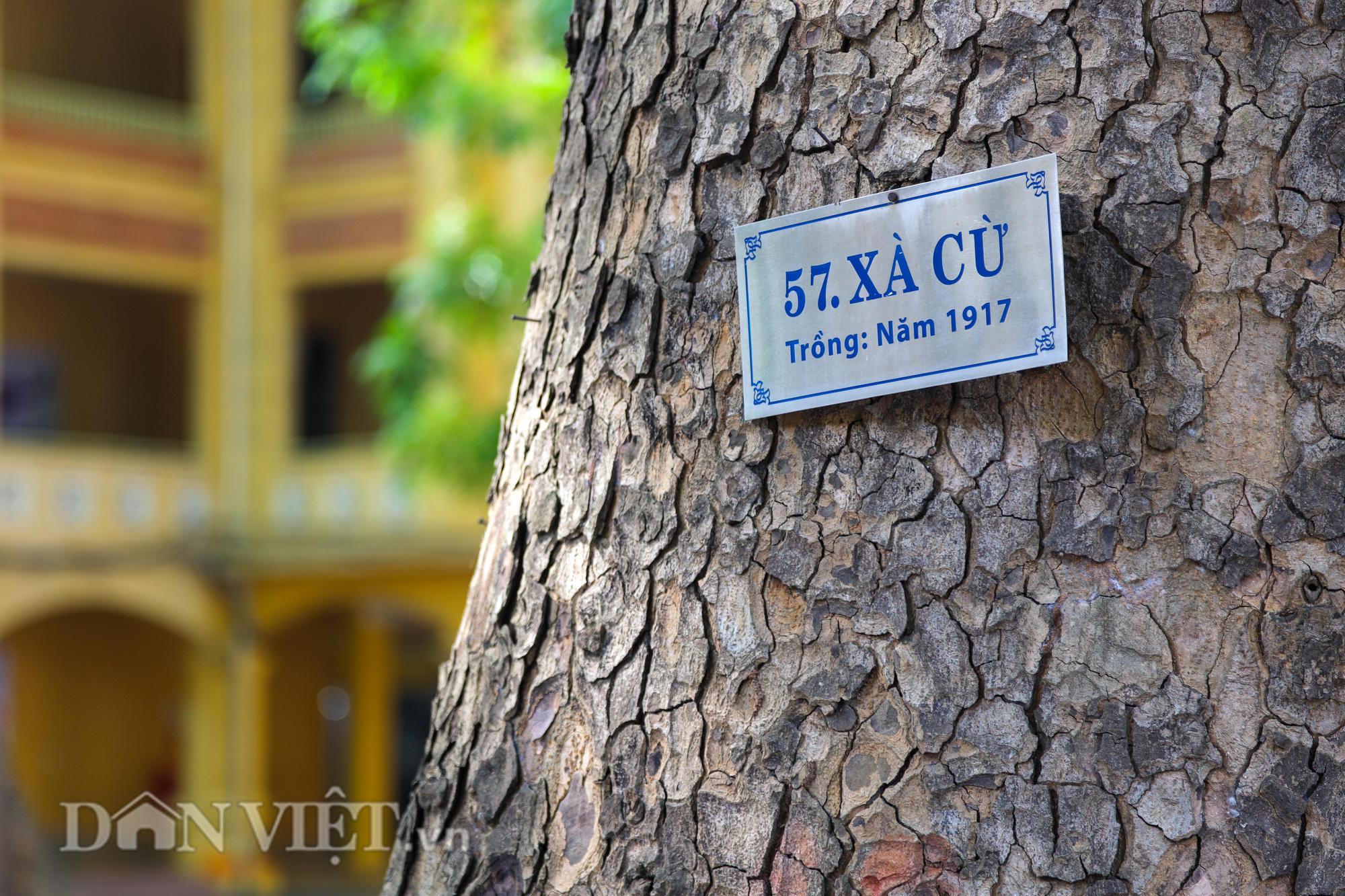 Học sinh Hà Nội không hề lo sợ dù ngồi giữa sân trường đầy cây cổ thụ - Ảnh 4.