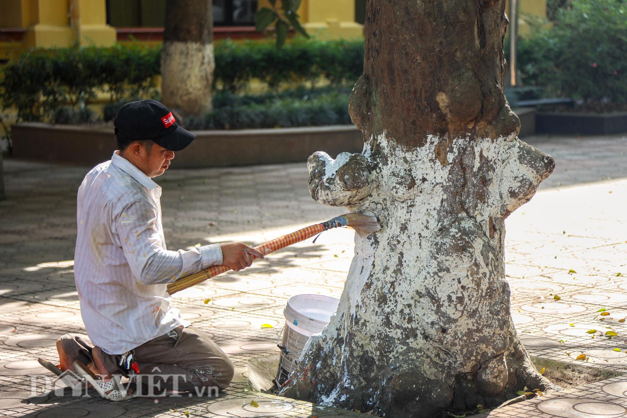 Học sinh Hà Nội không hề lo sợ dù ngồi giữa sân trường đầy cây cổ thụ - Ảnh 5.