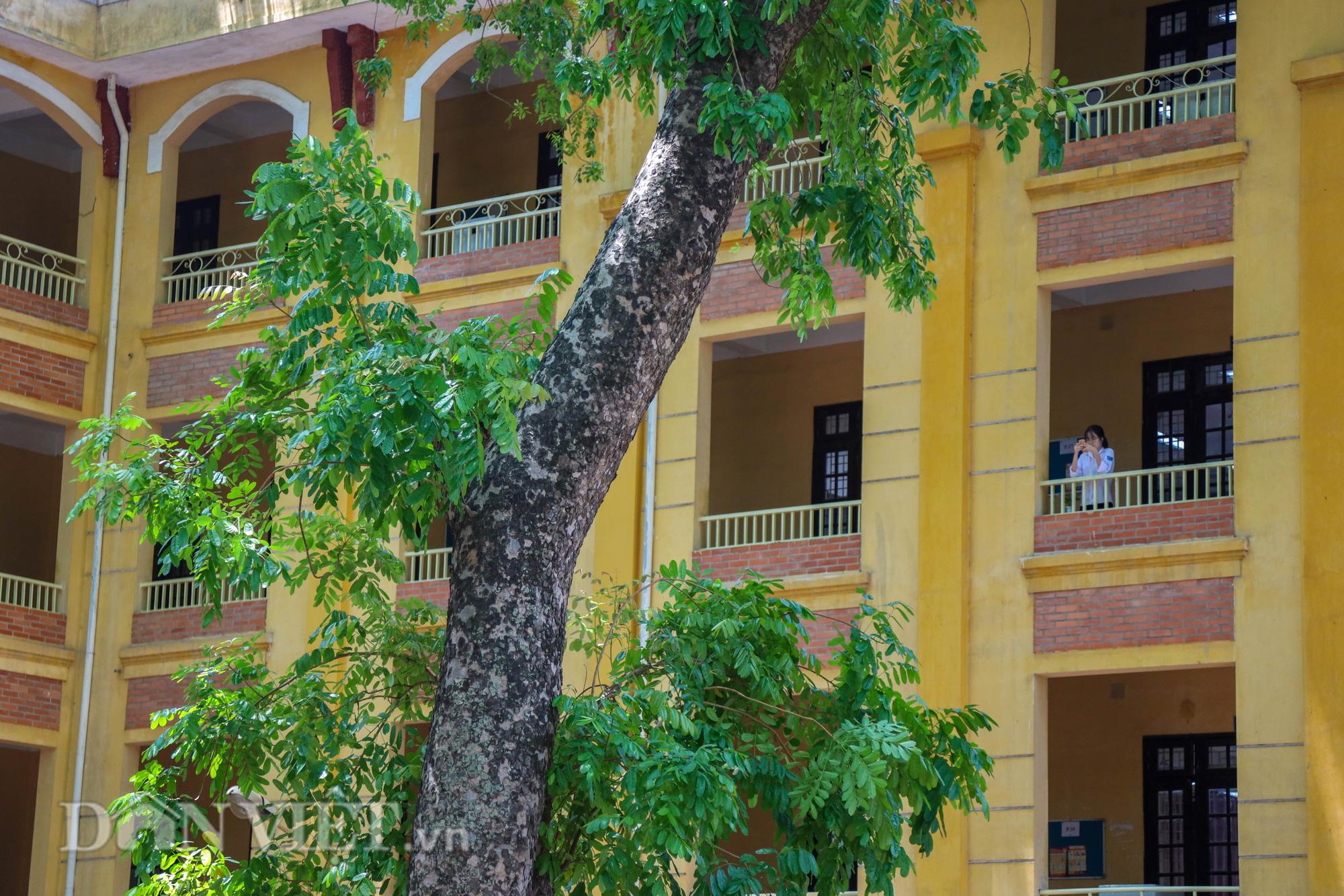 Học sinh Hà Nội không hề lo sợ dù ngồi giữa sân trường đầy cây cổ thụ - Ảnh 6.