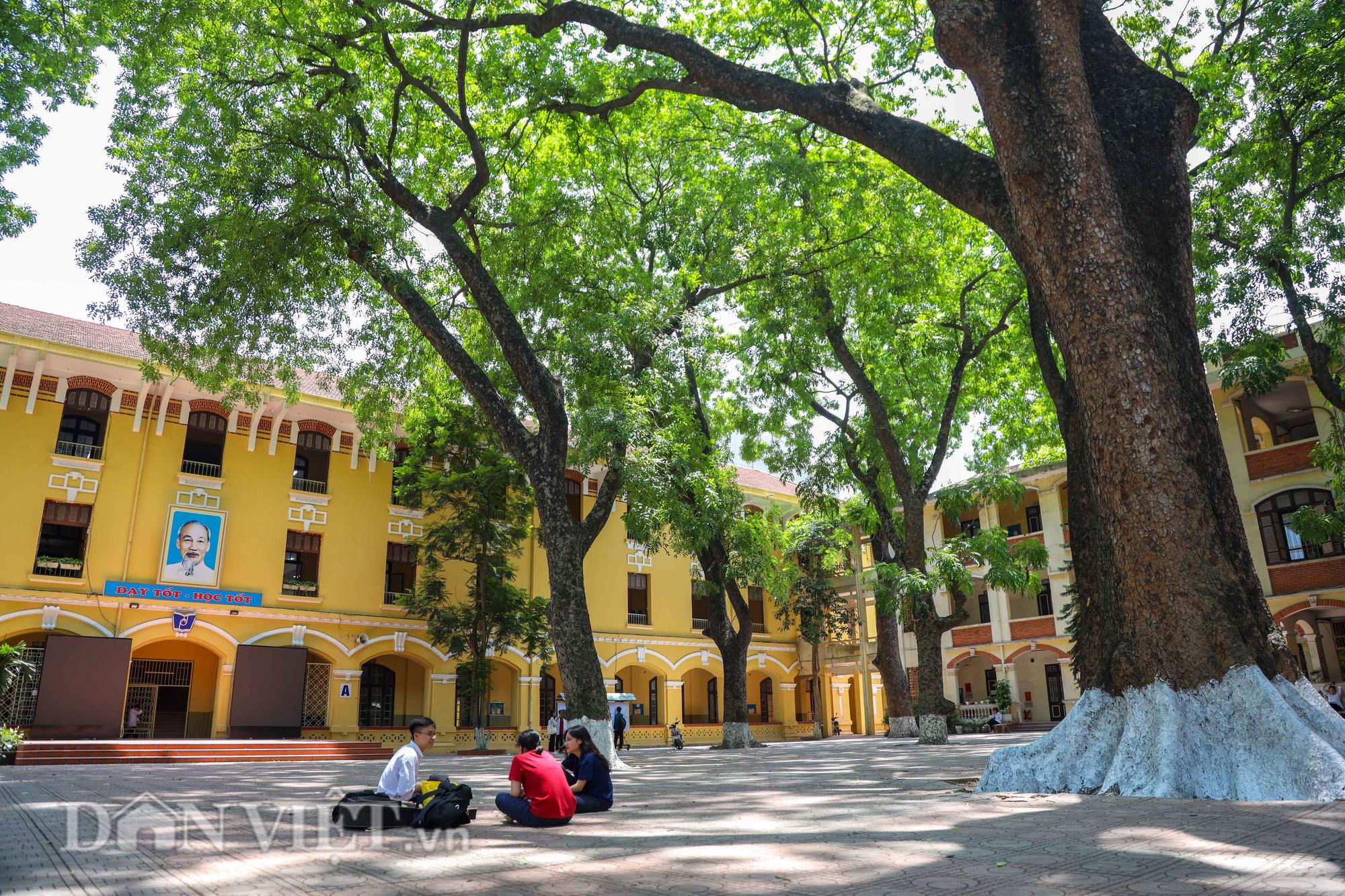 Học sinh Hà Nội không hề lo sợ dù ngồi giữa sân trường đầy cây cổ thụ - Ảnh 9.